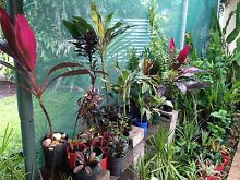 Potted plants Herbert Litchfield Area Preview