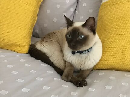 Wanted: MY CAT LAST SEEN LILBURNE RESERVE DUNCRAIG