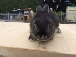 Dwarf rabbit ready for a new home.