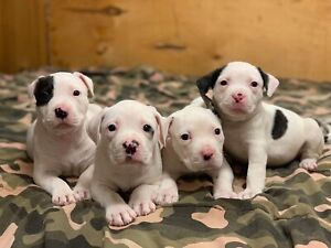 Adopt Dogs & Puppies Locally in Prince George | Pets