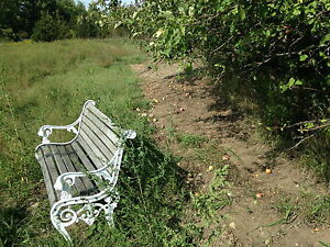 Beautiful 5 Acre lot with woods and field by Trent River Belleville Belleville Area image 3