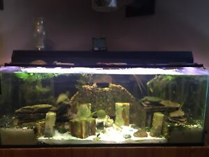 75 gallon custom fish tank or terrarium with
