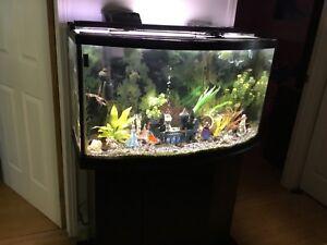 Aquarium 45 gallons avec meuble