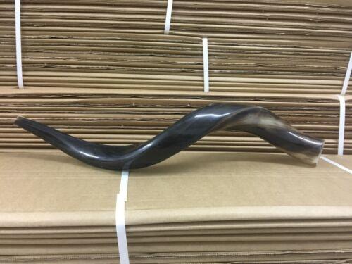 Full polished natural Judaica Kosher 50-60Cm Yemenite Kudu Shofar horn Israel