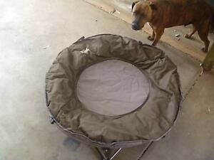 Folding Pet Bed Parafield Gardens Salisbury Area Preview