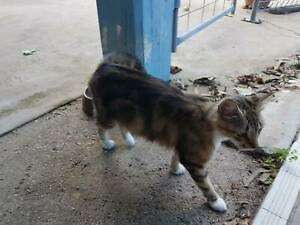 Cat to Give Away