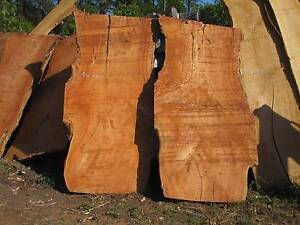 Slabs of Blue Gum timber, blue gum. Yandina Maroochydore Area Preview