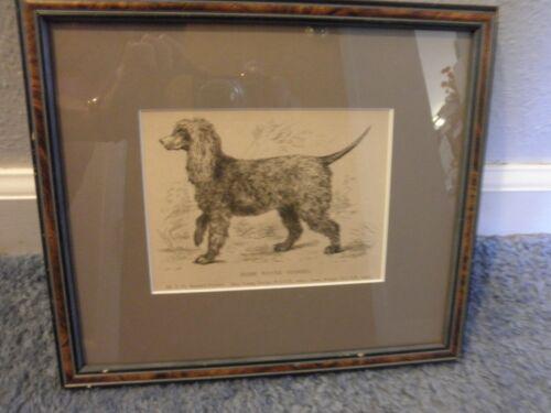 Antique Vintage Bookplate, Matted & Framed, Irish Water Spaniel, Dog