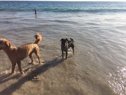 Free dog Waikiki Rockingham Area Preview
