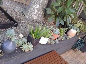 POTTED PLANTS FROM $2 TO $4 ONLY :) Jindalee Brisbane South West Preview