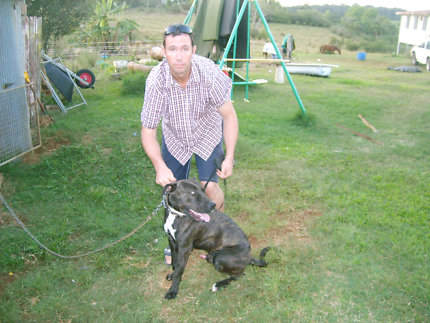 Dog training problems?