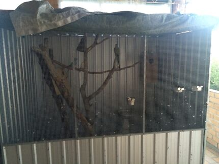 Huge aviary plus one breeding pair ringnecks with eggs Henley Beach South Charles Sturt Area Preview
