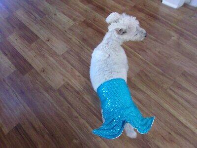 Merman Halloween Costume (dog mer-man costume,Halloween,shiny turquoise, Medium*(read size)