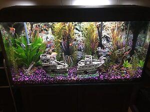 80 gallon Aquarium