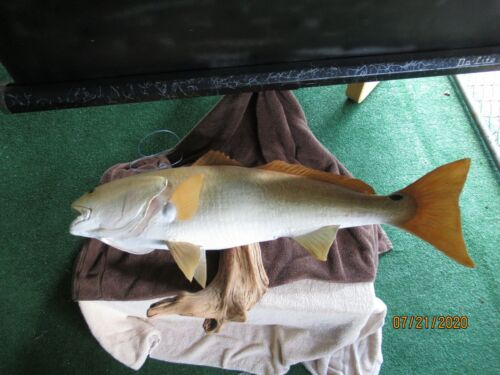 "Redfish Full Mount in a Driftwood,  38"" Long"