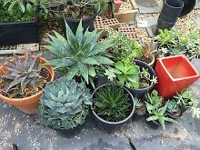 Large succulant collection Macquarie Links Campbelltown Area Preview