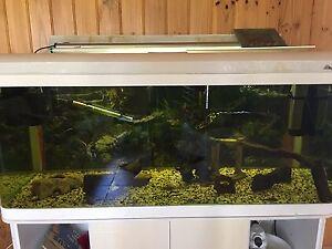 5x2x2 fish tank Mount Samson Pine Rivers Area Preview