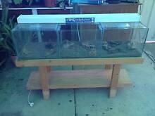 4ft Breeders Fish Tank Aquarium Murray Bridge Murray Bridge Area Preview