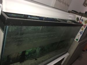 60 gal fish tank for sale rush