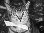 Analogue to Digital LLC