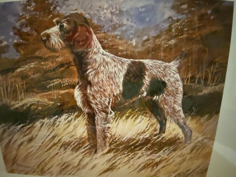 German Wirehaired Pointer Limited Edition 11 X14 Signed Numbered Print Van Loan