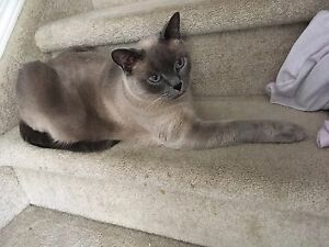 Lost cat in Meadows area