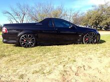 Must sell this week R8 MALOO VE Scarborough Stirling Area Preview