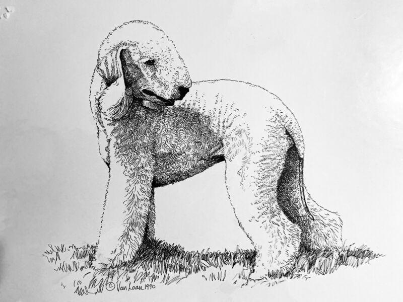 Original Pen And Ink From 1990 Of A Bedlington Terrier By Martha Van Loan