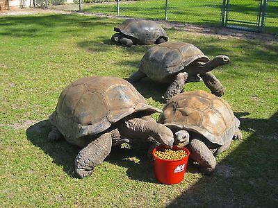 Mazuri Tortoise Chow 2 Lbs