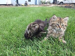 Farm cats for sale!