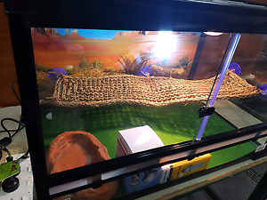 Reptiles and more Smithfield Plains Playford Area Preview