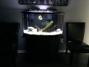 Complete 46 gallon aquarium for sale