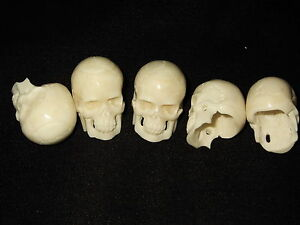 Hand carved Bone (Bos taurus) Human Skull with hole approx. 3.0 cms UK despatch