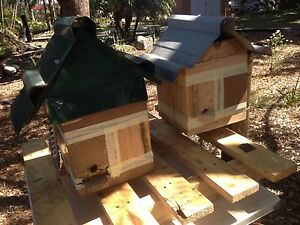 Native Stingless Bee Hives Burpengary Caboolture Area Preview