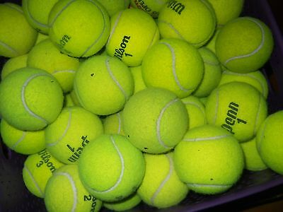 Lot of 50 used tennis balls dog toys, chairs, etc.