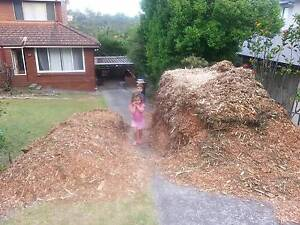 Free mulch in Frenchs Forest. Frenchs Forest Warringah Area Preview