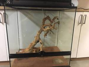 reptile enclosure Kellyville The Hills District Preview