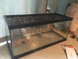 20 gallon lizard tank