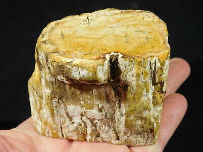 Petrified Wood Fossil Polished 446gr