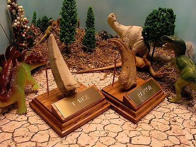 RAPTOR CLAW T-REX TOOTH MUSEUM QUALITY REPLICA w/STAND - T Rex Stands
