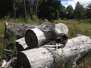 Give away Hardwood firewood or fence posts Beechmont Ipswich South Preview
