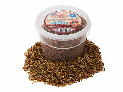 3 Litres High Quality Chubby Dried Mealworms in a Tub Mealworm for Wild Birds
