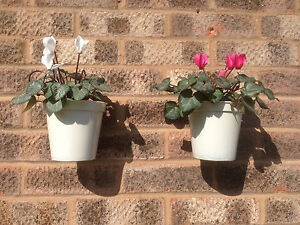 plant pot holder x 2 with pots fence wall garden patio