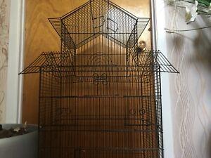 Cage oiseau - Bird cage