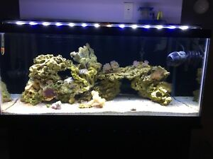 40 gallon reef