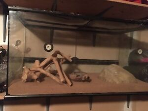 Bearded  dragon  cage