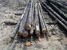 Cypress posts and rails Goranba Dalby Area Preview