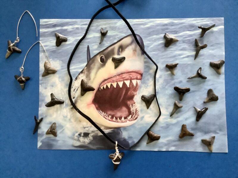 Shark Teeth & Jewelry Lot Of 25 Fossilized Shark Teeth Various Sizes No Broken