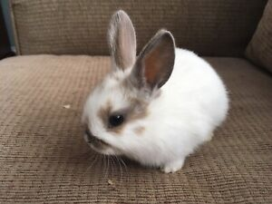 Baby Bunny SOLD PPU