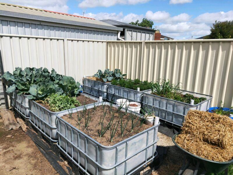 Wicking Bed Ibc Raised Garden Bed Pots Garden Beds Gumtree Australia Melbourne City Melbourne Cbd 1258312759